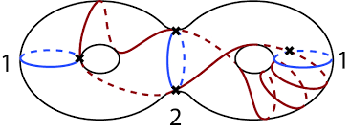 Simple closed curves—neither the blue nor the red curve intersect themselves